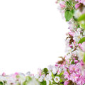 Spring background with beautiful blossoms Royalty Free Stock Image