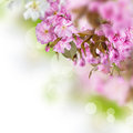 Spring background with beautiful blossoms Stock Photos