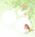 Spring background with bird leafs blossom and redbreast Stock Photography