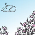 Spring background with blossom brunch of Magnolia