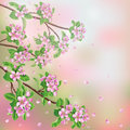 Spring background with blossoming apple tree branches and flying petals Stock Photography