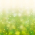 Spring background with chamomiles Royalty Free Stock Images