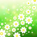Spring background with chamomiles Stock Images