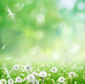 Spring background with dandelion Royalty Free Stock Photo