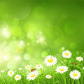 Spring background with flowers nature green grass and vector illustration Royalty Free Stock Photo