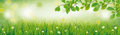 Spring Background Grass Beech Twigs Header Royalty Free Stock Photo