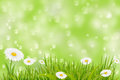 Spring background with grass and daisies bokeh lights Stock Photos