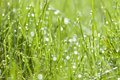 Spring background of grass with dew abstract green water drops Royalty Free Stock Photos