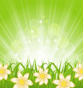 Spring background with green grass and flowers illustration Royalty Free Stock Photo