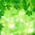 Spring background with green leaves Stock Image
