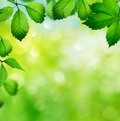 Spring background with green leaves Royalty Free Stock Images