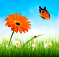 Spring background. Orange beautiful flower and a butterfly. Vect Royalty Free Stock Photo