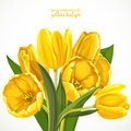 Spring background with yellow tulips on white Stock Images