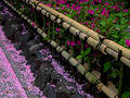 Spring bamboo fence Royalty Free Stock Photo