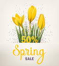 Spring banner with crocus