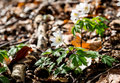 Spring beams beautiful white anemones Royalty Free Stock Photo