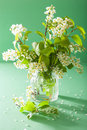 Spring bird-cherry blossom in vase over green background Royalty Free Stock Photo