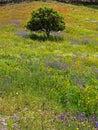 Spring bliss Stock Photos
