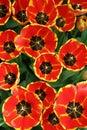 Spring bloemen in tuin 1 op Royalty-vrije Stock Fotografie