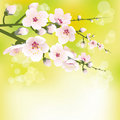 Spring blooming Stock Image