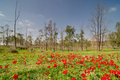 Spring in a blooming East Negev desert Royalty Free Stock Photo