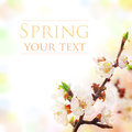 Spring blossom with beautiful pastel background Royalty Free Stock Photos