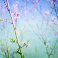 Spring blossom bokeh pastel painterly feel copy space Stock Photography