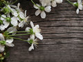 Spring blossom cherry flowers Royalty Free Stock Images