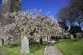 Spring blossom in an english churchyard beautiful country Royalty Free Stock Photography