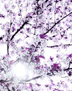 Spring blossom purple in bright clear sky with sunshine Royalty Free Stock Image