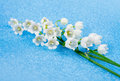 Spring blossoming flowers lily of the valley on a blue bckground Royalty Free Stock Image