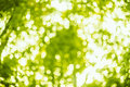 Spring bokeh background blurred lights bright green abstract summer Royalty Free Stock Image