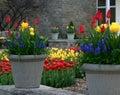 Spring Botanical Garden