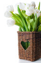 Spring bouquet fresh white tulips wicker basket close up Stock Photos