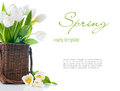 Spring bouquet fresh white tulips wicker basket isolated close up Stock Image
