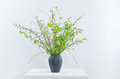 Spring bouquet with green twigs in vase Royalty Free Stock Photo