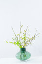 Spring bouquet with green twigs in vase Stock Photos