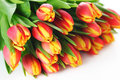 Spring bouquet tulips on white background Stock Images