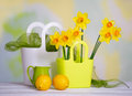 Spring bright still life with flowers and decor details beautiful yellow narcissus other interior decoration Stock Image