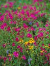 A splash of spring color erupts as wildflowers bloom Royalty Free Stock Photo