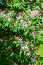Spring bush with pink flowers nature background Stock Photo
