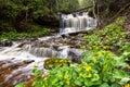 Spring Buttercups at Wagner Falls - Munising Michigan Royalty Free Stock Photo
