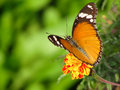 Spring butterfly background warm weather with orange sitting in a garden on a flower with blurred bright green nature Royalty Free Stock Photo