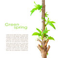 Spring card design with copyspace Stock Photo