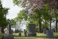 Spring Cemetery Royalty Free Stock Photo