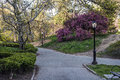 Spring in central park new york city Royalty Free Stock Photo