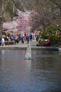 Spring in central park with rc sailing boat blossom Stock Photography