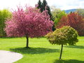 Spring cherry trees in blossom Stock Image