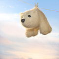 Spring cleaning toy polar bear hanging on a rope and drying off after washing on the background of a gentle sky Royalty Free Stock Photo