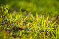 Spring close up of colorful green grass in sunlight outdoors